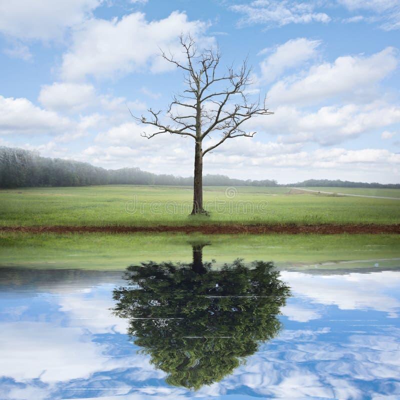 Réflexion de vieux et nouvel arbre images stock