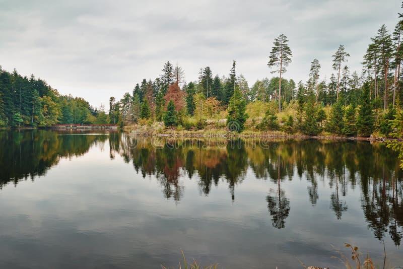 Réflexion des arbres photos stock