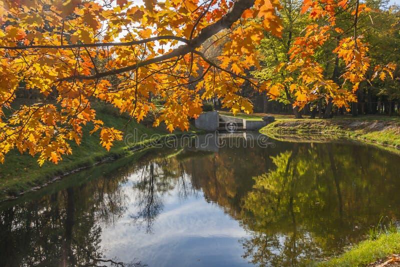 Réflexion des arbres d'automne dans l'eau image stock