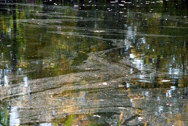 Réflexion des arbres dans l'eau photos stock