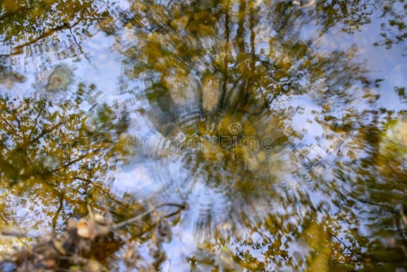R?flexion des arbres dans l'eau d'un courant avec les cercles sph?riques des gouttes de pluie en baisse photos stock