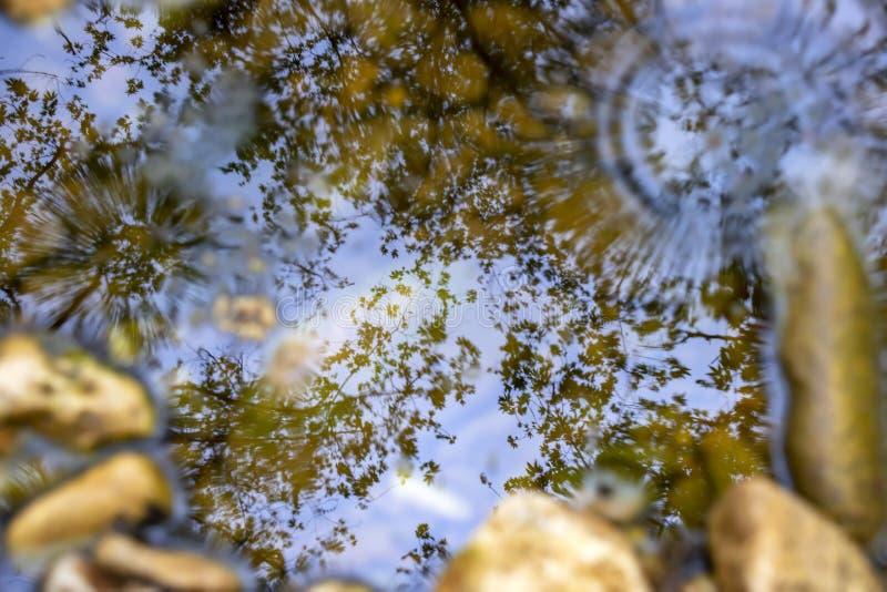R?flexion des arbres dans l'eau d'un courant avec les cercles sph?riques des gouttes de pluie en baisse photographie stock