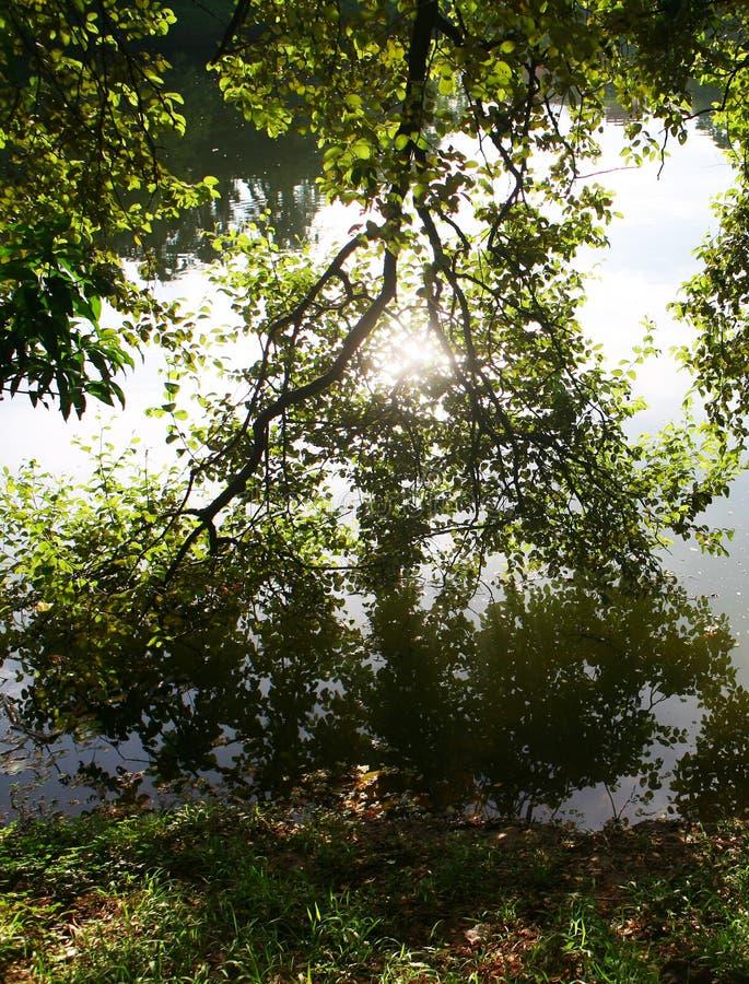 réflexion des arbres dans le lac calme image libre de droits