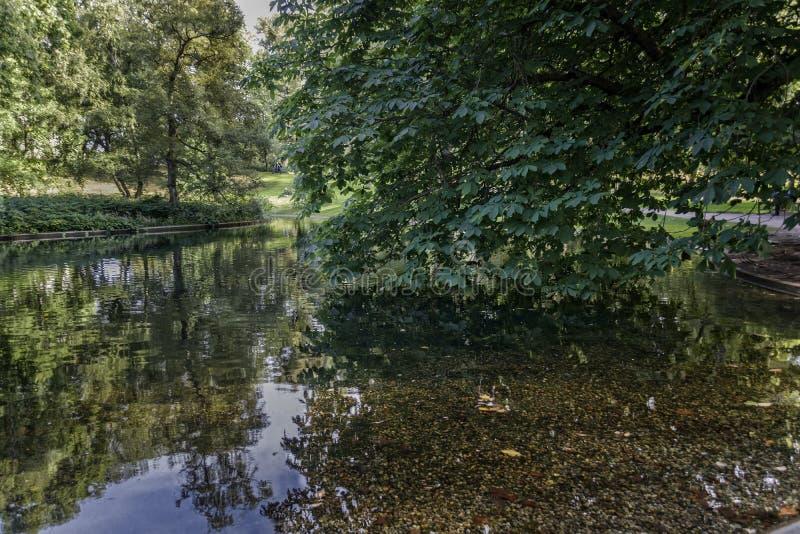 Réflexion des arbres dans un étang de parc image stock