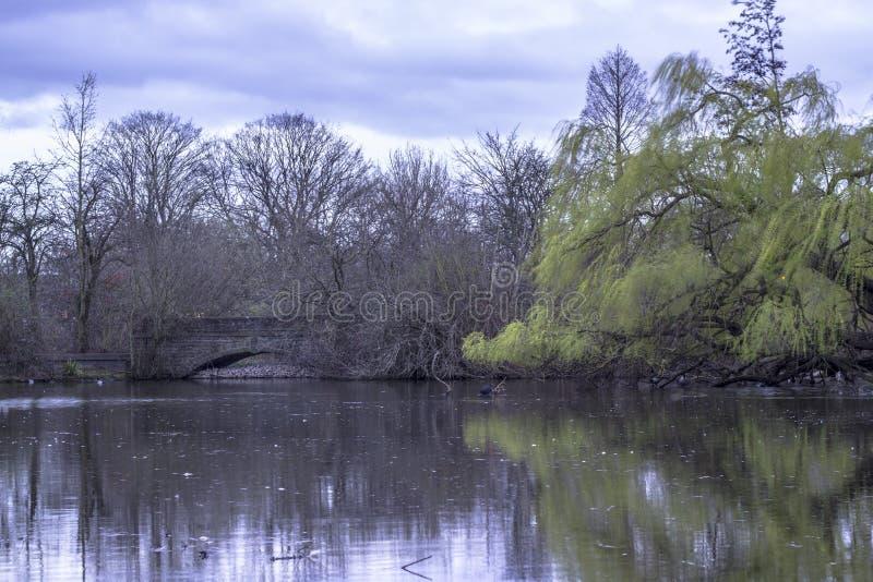 Réflexion des arbres dans un lac tard le soir image libre de droits