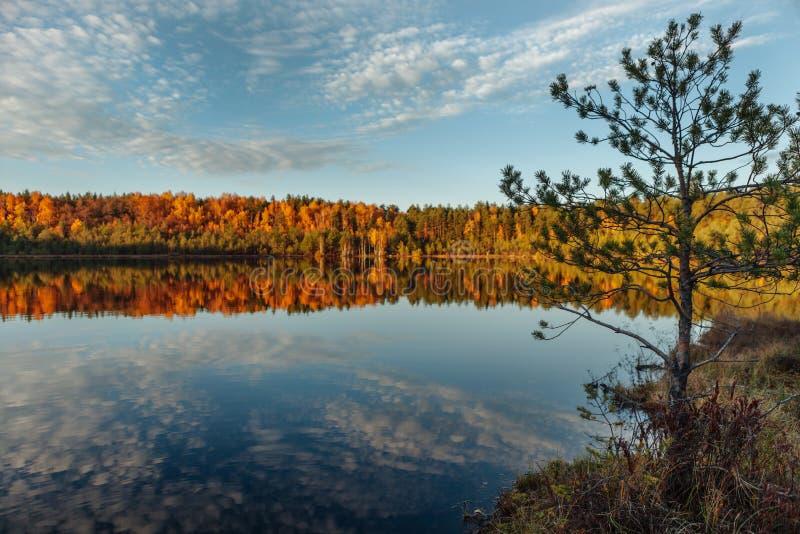 Réflexion des arbres et des nuages dans l'eau au coucher du soleil d'or image libre de droits