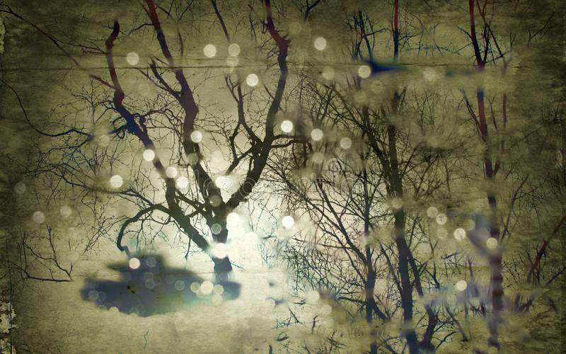 réflexion des arbres nus et du soleil flou dans le magma photos libres de droits