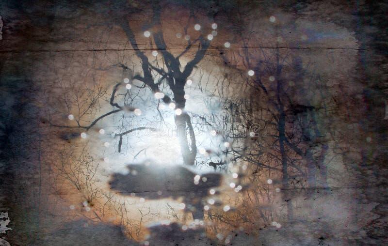 réflexion des arbres nus et du soleil flou dans le magma photographie stock