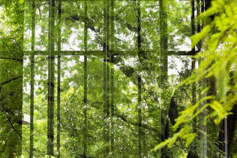 Réflexion des feuilles vertes photos stock