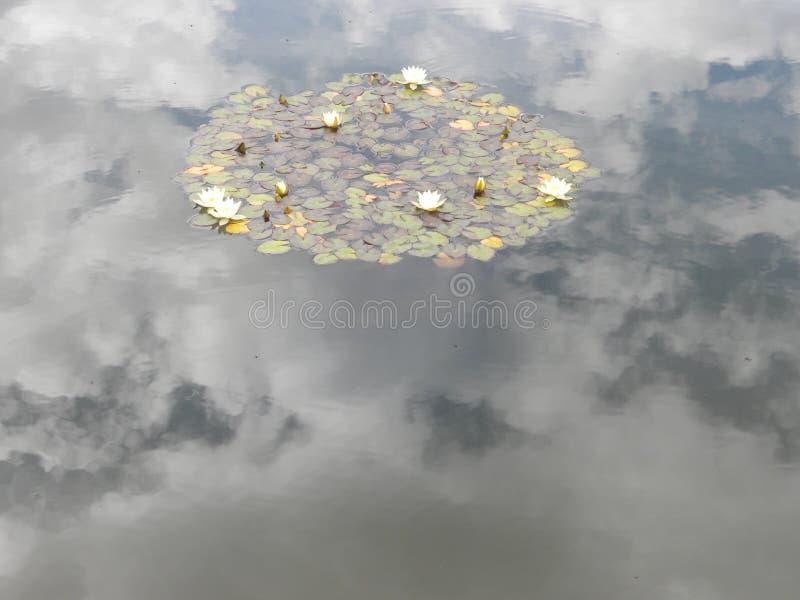 Réflexion des nuages dans un étang de Waterlilies photos libres de droits