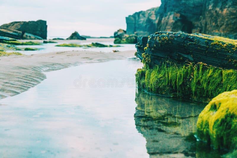 Réflexion des pierres avec l'algue sur la plage images stock
