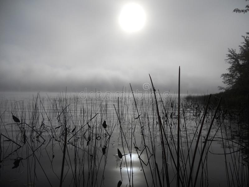Réflexion des roseaux dans l'eau un matin brumeux photographie stock