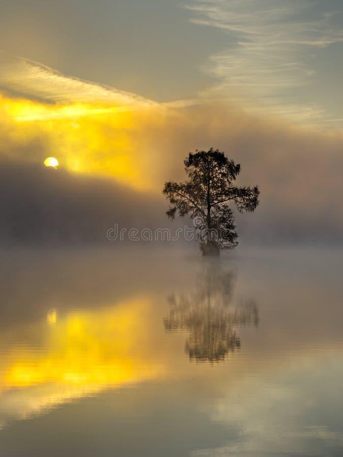 Réflexion en travers d'arbre au lever de soleil photos libres de droits