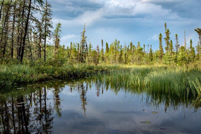 Réflexion impeccable dans des grands-Jardins parc national, Québec de Les photos stock