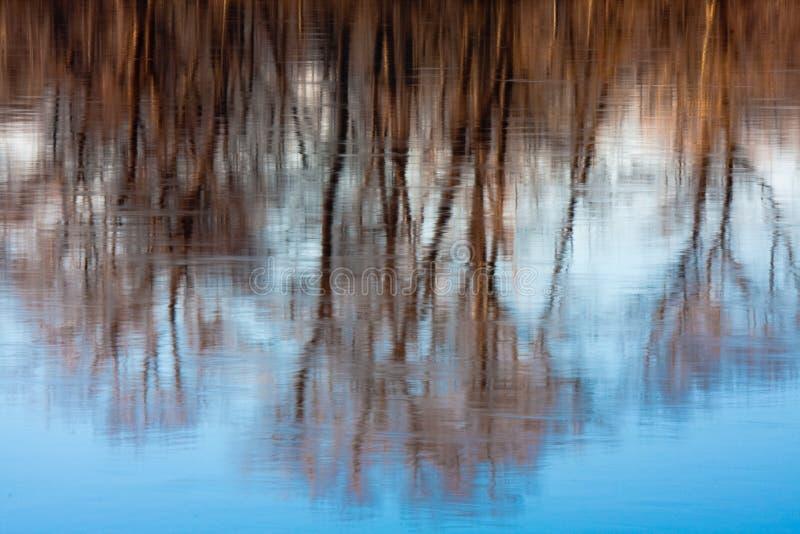 Réflexion rêveuse des arbres dans le fleuve photographie stock libre de droits