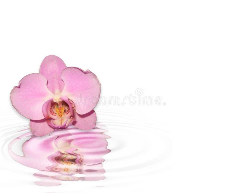 réflexion rose d'orchidée illustration libre de droits