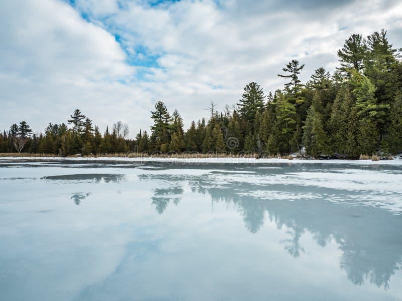 Réflexions 7 Cedar Forest Beside Frozen Marsh de dégel d'hiver photo stock