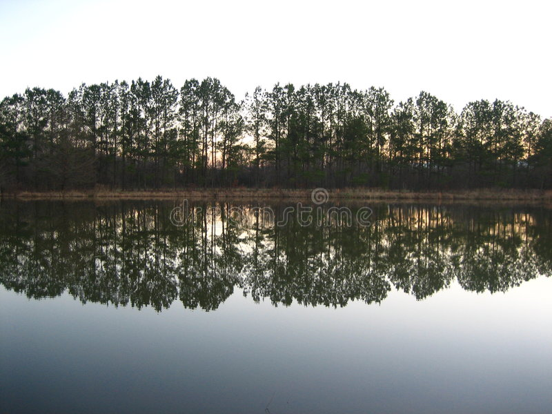 Réflexions d'arbre images stock