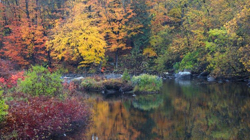 Réflexions d'arbre d'automne dans l'étang images libres de droits