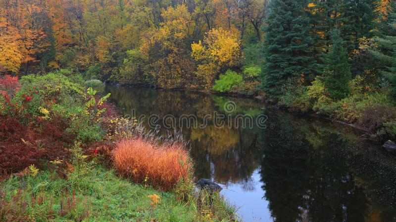 Réflexions d'arbre d'automne dans l'étang photos stock