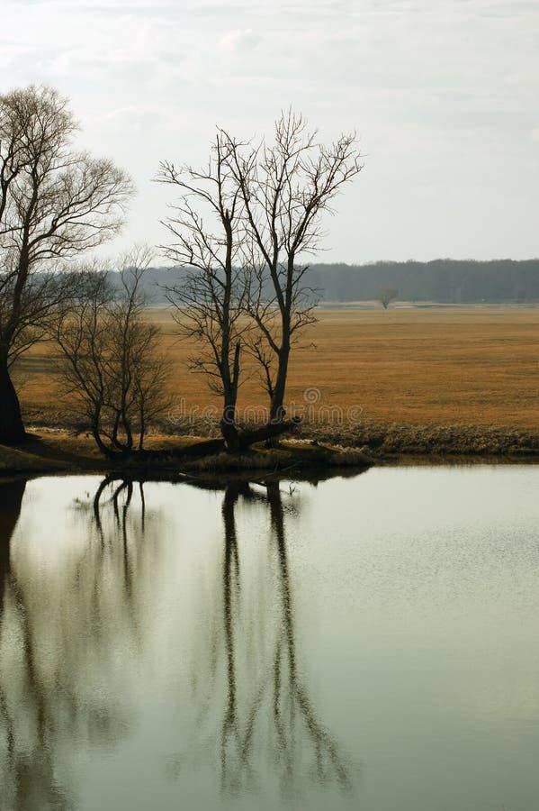 Réflexions d'arbre dans l'eau photographie stock libre de droits