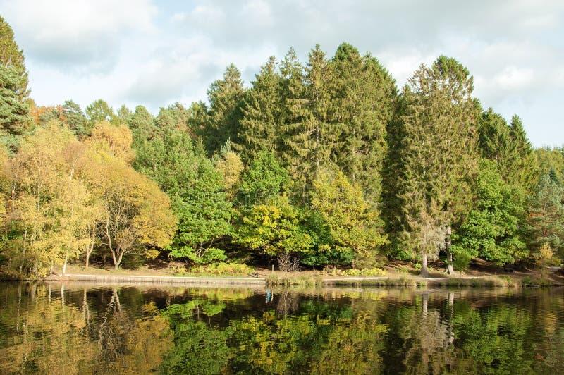 Réflexions d'automne dans l'eau des arbres dans la forêt de doyen dans la campagne anglaise photographie stock