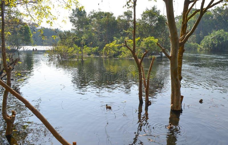 Réflexions d'eau de rivière image libre de droits