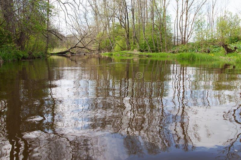 Réflexions dans l'eau image libre de droits