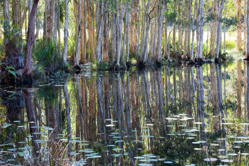 Réflexions dans un marais image stock