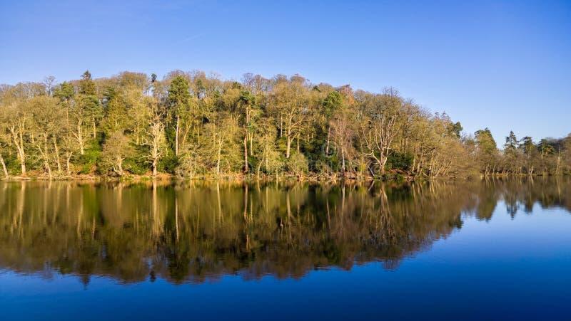 Réflexions de lac woodland de ciel bleu photo libre de droits