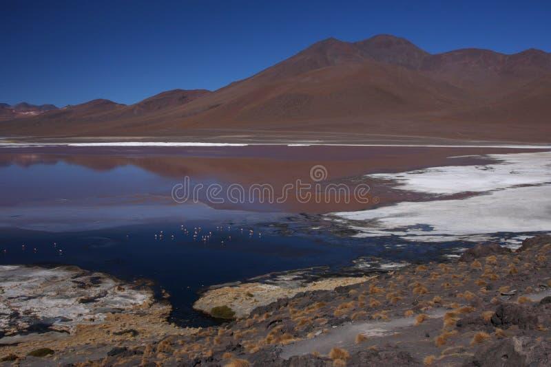 Réflexions de Laguna Colorada images stock