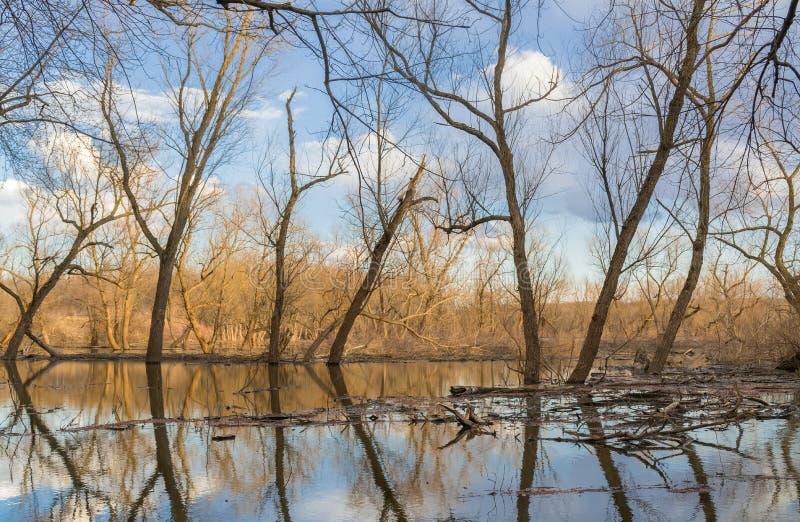 Réflexions de rivière photographie stock libre de droits