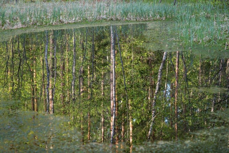 Réflexions des arbres dans l'eau photographie stock libre de droits
