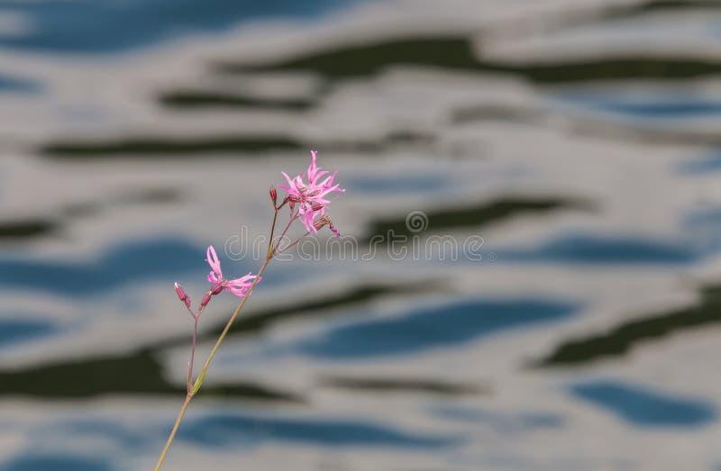 Réflexions et textures en rivière photo stock