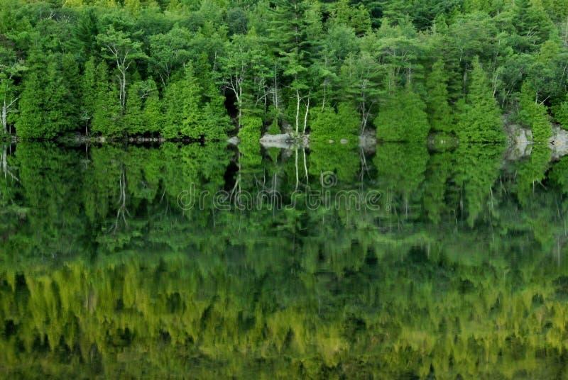 réflexions vertes d'acadia photo stock