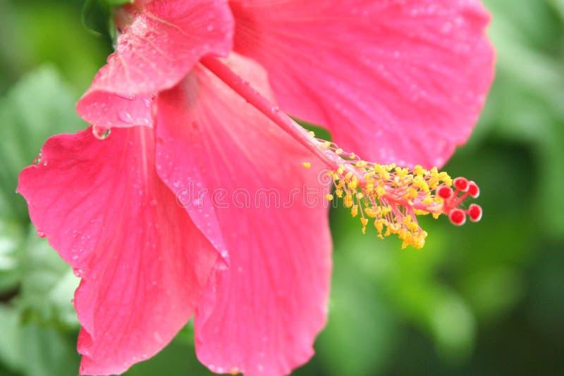 Download Régénérez photo stock. Image du régénérez, humide, ketmie - 739522