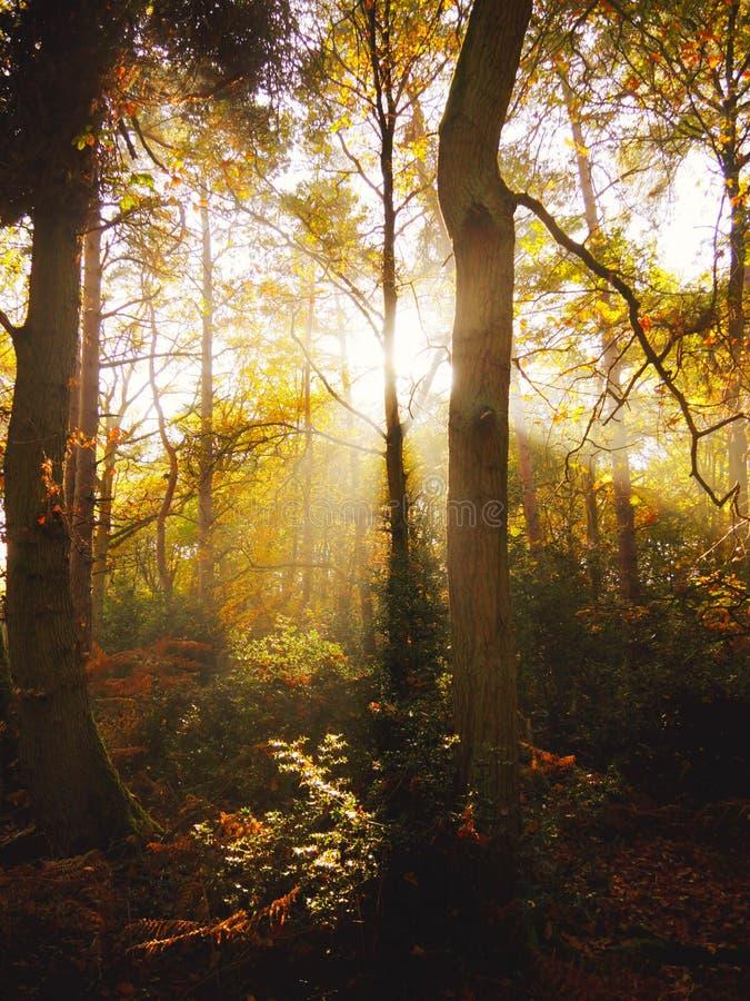 Région boisée antique en Angleterre images stock