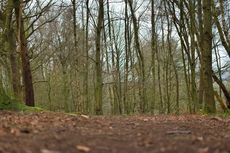 Région boisée britannique photos stock