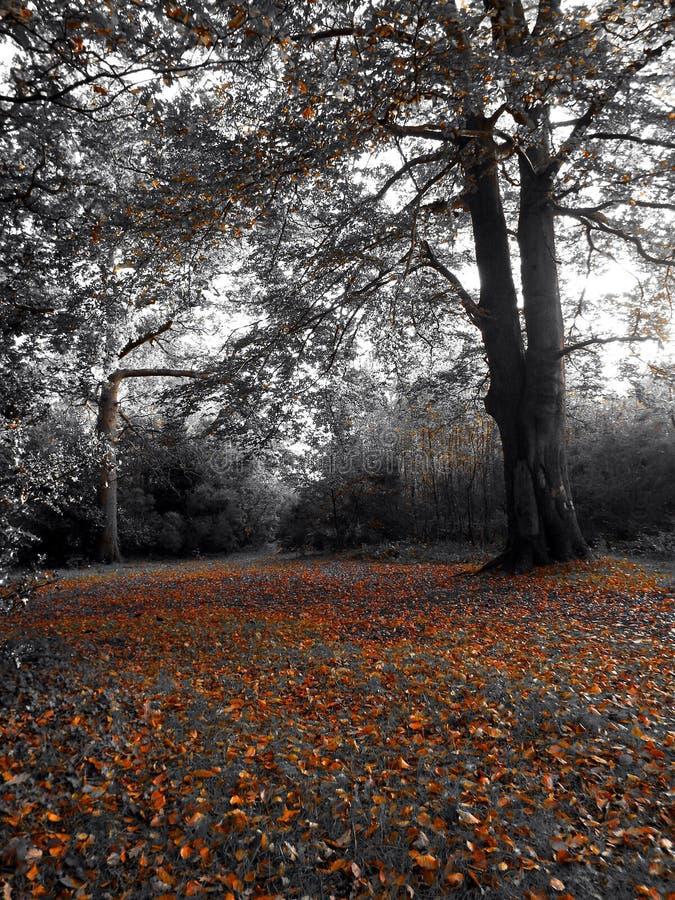 Région boisée d'automne photo stock