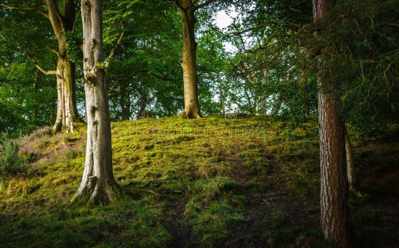 Région boisée dans Cumbria photo stock