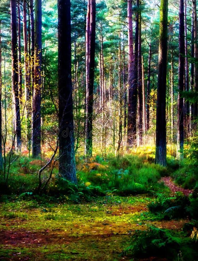 Région boisée heureuse en Autumn Sunshine photo libre de droits