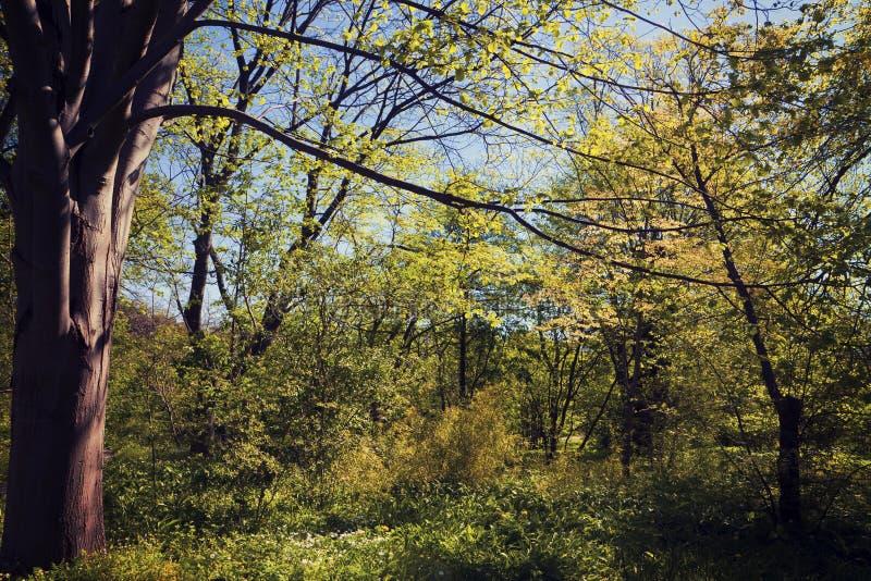 Région boisée idyllique photos libres de droits