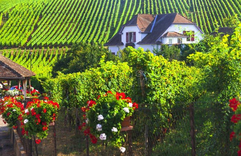 Région d'Alsace de la France - itinéraire célèbre de vigne images libres de droits
