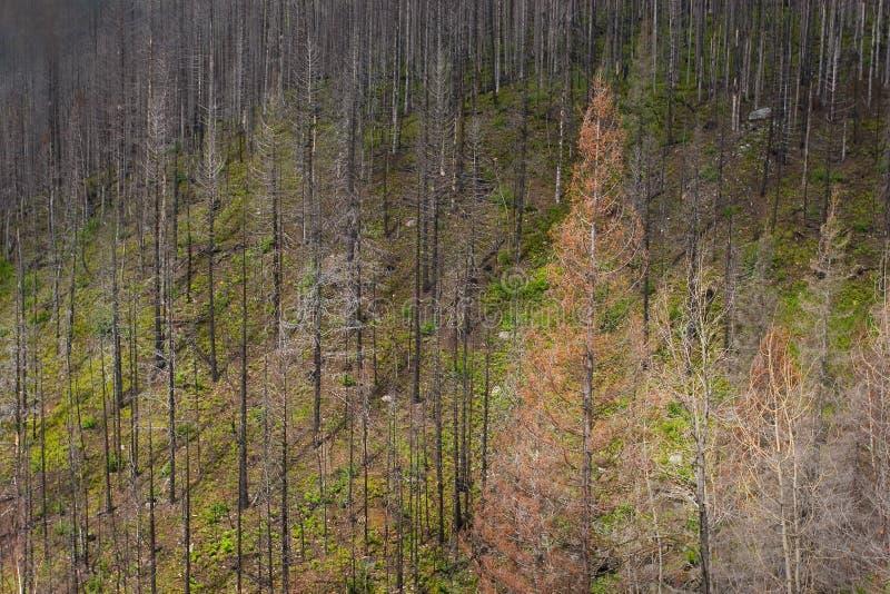Région d'incendie de forêt, stationnement national de glacier images libres de droits