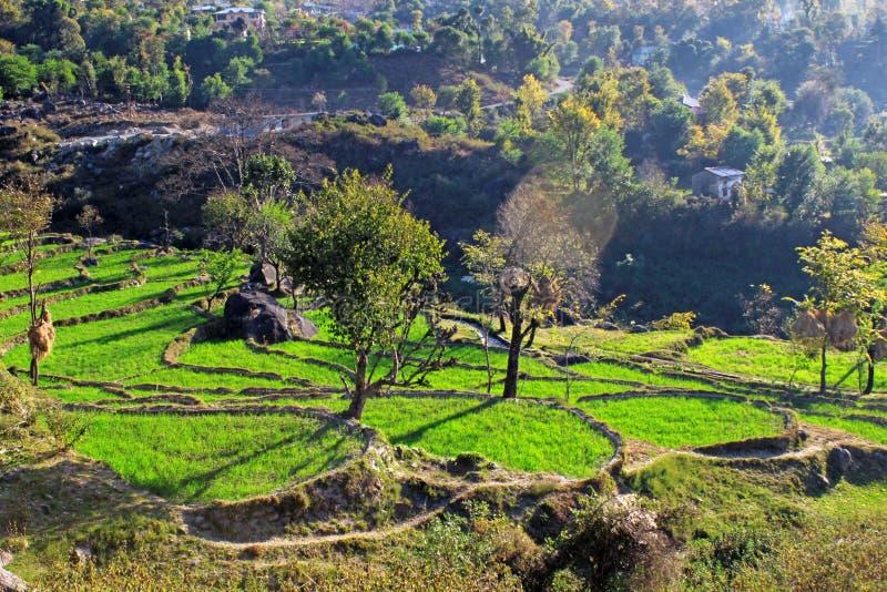 Région de l'Himalaya à distance rurale d'agriculture biologique de Himachal n photos libres de droits