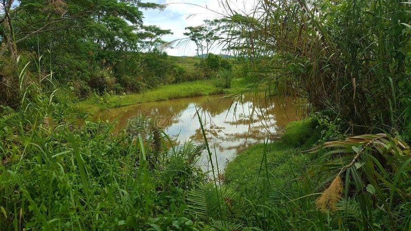 Région de marais photos stock