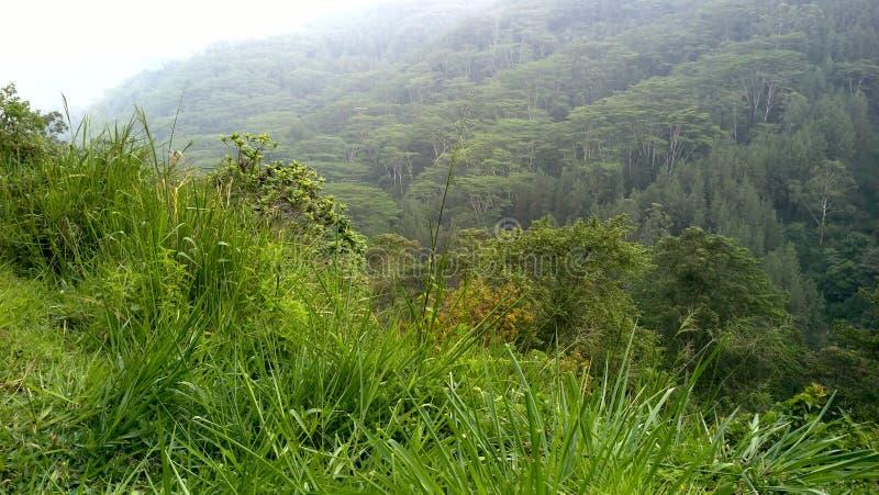 Région de Mountian au Sri Lanka image libre de droits