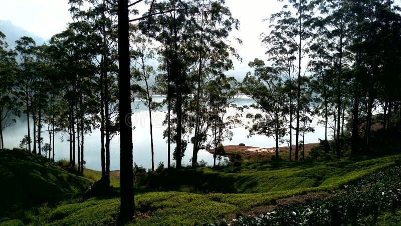 Région de Mountian au Sri Lanka images libres de droits