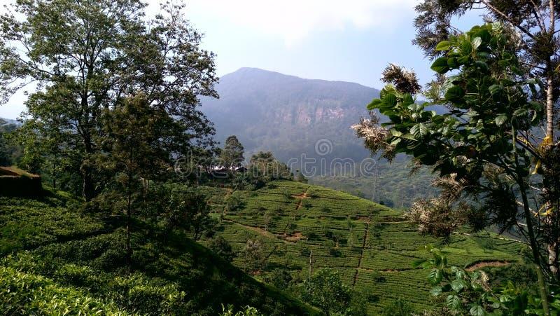 Région de Mountian au Sri Lanka images stock