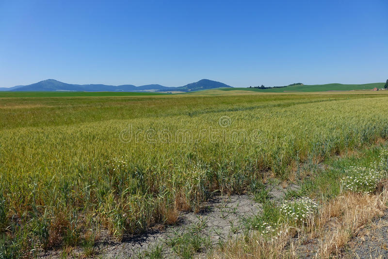 Région de Palouse - Idaho du nord image stock